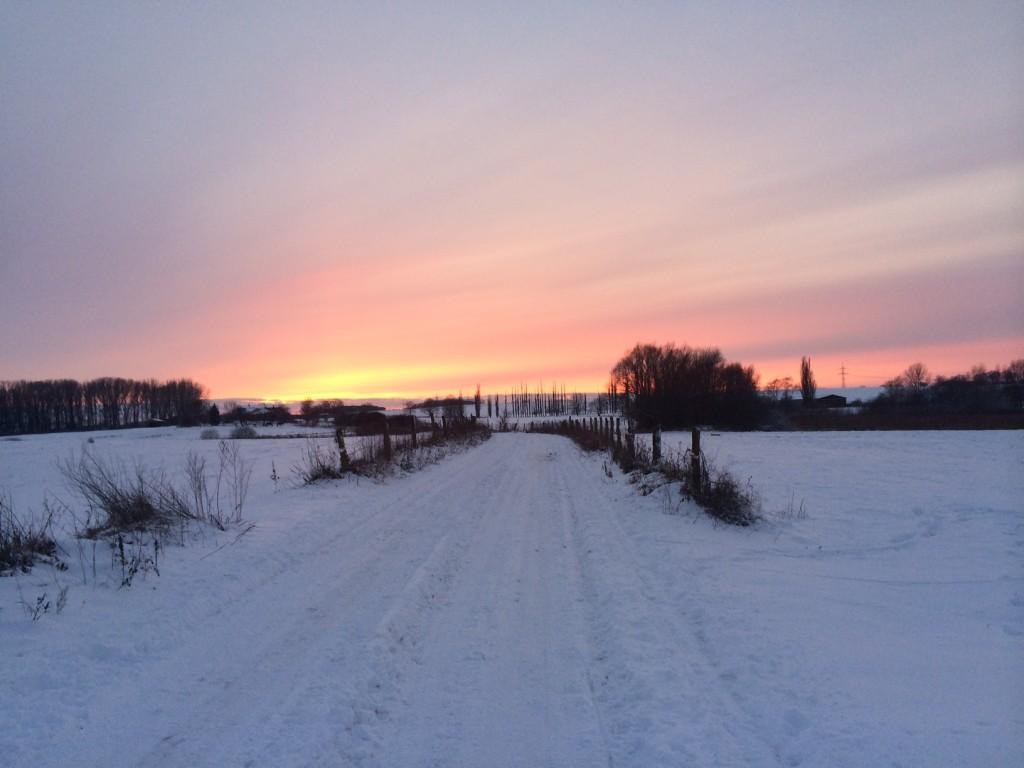 Sumpfseewiesen in Güstrow. Foto: Bianca Garloff